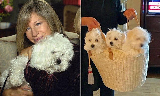 Barbra Streisand revels FOUR puppies were cloned from her late dog