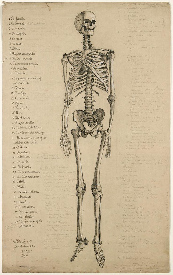 The 167 best Vintage anatomy images on Pinterest | Human anatomy ...