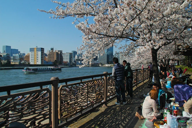 From the Sumida River on the east side of Tokyo.  Taken Early April 2012.
