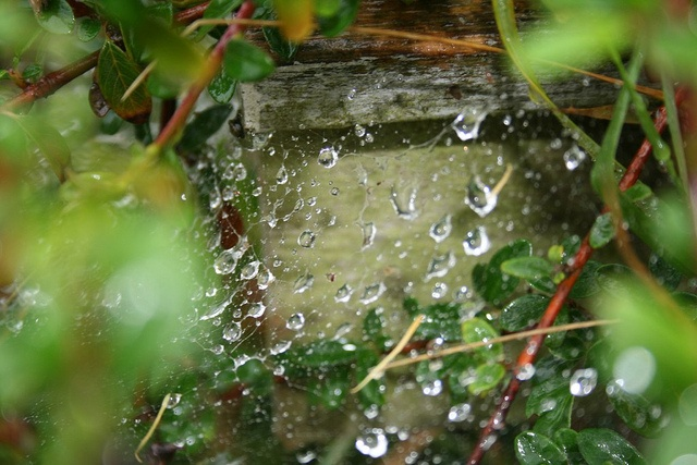 Regn by Mimesis@Monday, via Flickr