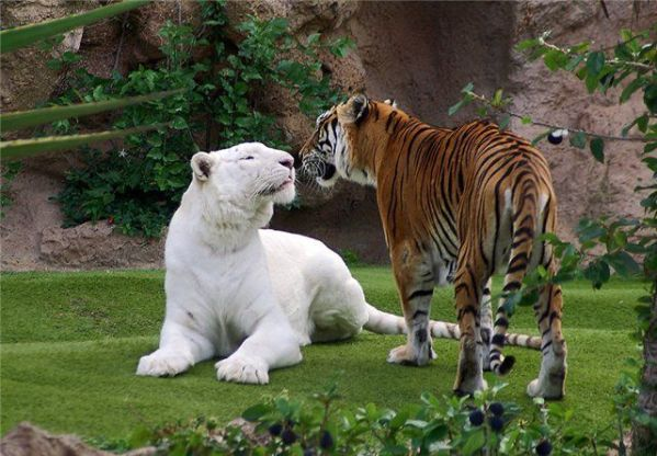 17 Amazing Albino Animals~You will be awe struck!  These Albinos are very rare animals and some rarely ever seen!
