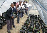 combating aids through healthy diet durban south africa