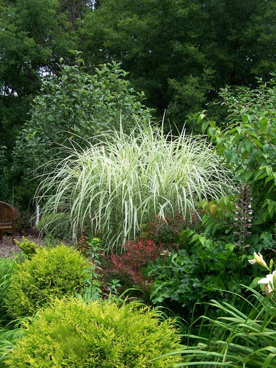 291 best Ornamental Grasses images on Pinterest | Ornamental ... - grass garden design