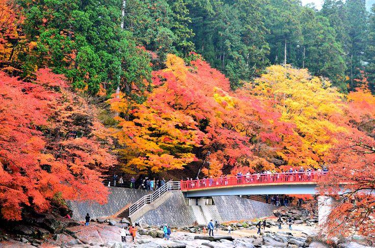 愛知・香嵐渓の紅葉 Korankei ,Aichi / Autumn leaves/Fall foliage in Japan