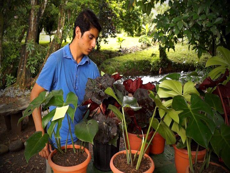 Agricultura periurbana (Costa Rica) - TvAgro por Juan Gonzalo Angel
