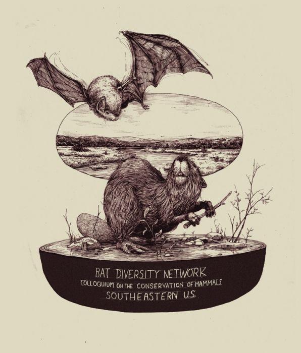 Bat Diversity Network - Art - Pat Perry
