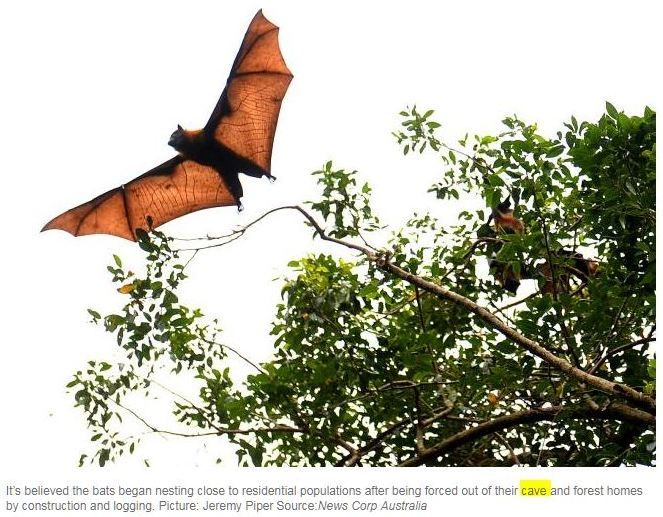 "Your HELP is needed. Please write to these publications (news.com.au & Gold Coast Bulletin) and ask them why Megabats, Flying-foxes/Fruit bats are used in this story and remove the pic. This story has nothing to do with Megabats.  For links and full article..  http://www.batsrule.info/2017/06/blood-sucking-vampire-bats-are.html   ""A PLAGUE of bloodsucking vampire bats has caused panic in regions across Brazil after they began feasting on humans, leaving one person dead. The diseased…"