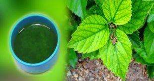 Apprenez à contrôler le diabète en 5 jours seulement avec ce remède naturel !