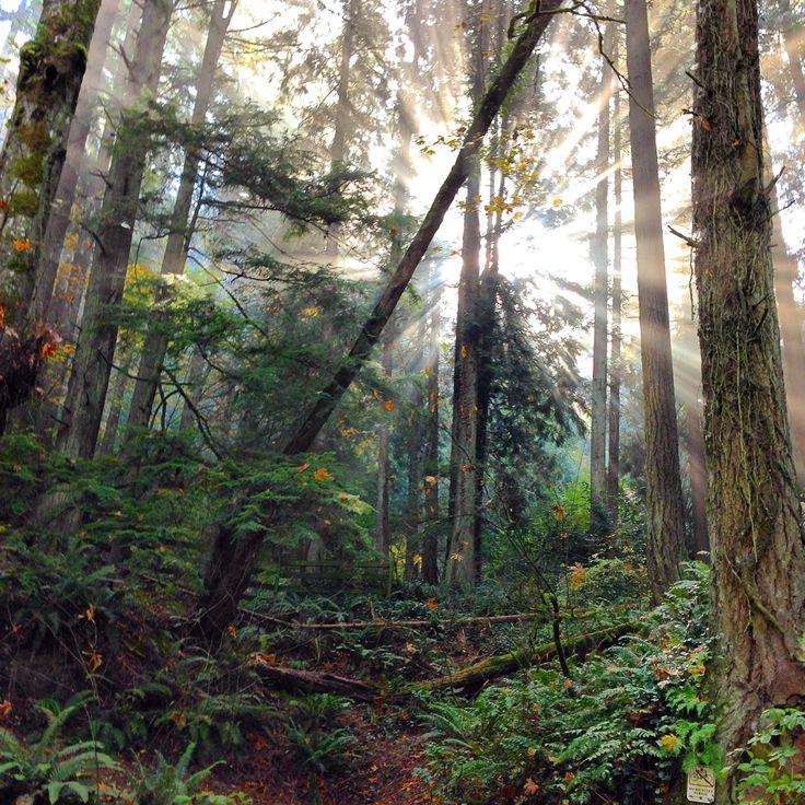 Forest Park   Portland, OR