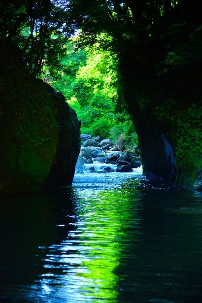 Kirishima, Kagoshima, Japan #緑 #Green