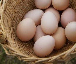 How to Raise Rhode Island Red Laying Hens | eHow