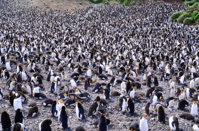 Mcquarie Island, Tasmania | 1,000,000 Places