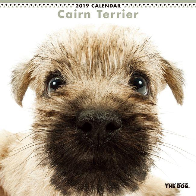 Pin By Debi Homesley Ramirez On Puppies Dog Calendar Dogs Puppies