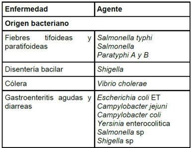Post Sencillo método de purificación de agua con nopal o chumbera 6