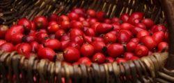 Rezept für Hagebutten-Marmelade / Rose hip jam recipe