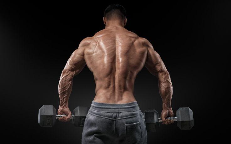 muscular, men, bare back