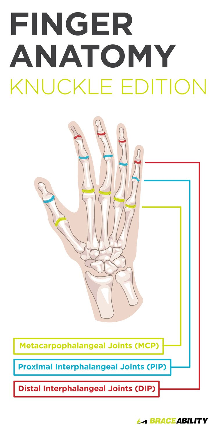 Fancy Finger Joints Anatomy Adornment - Human Anatomy Images ...