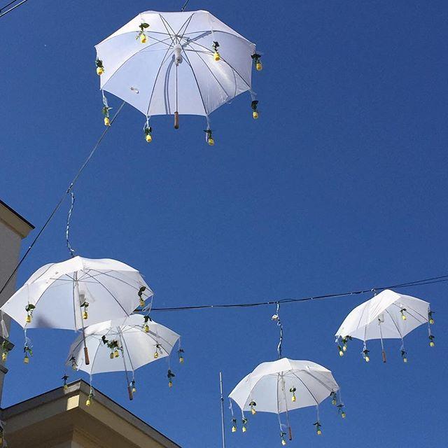 Umbrella Lamps in Meran! So pretty 😃#vegantraveler