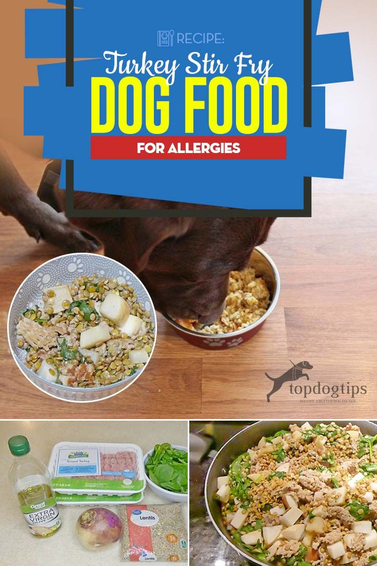 Recipe Turkey Stir Fry Dog Food For Allergies Dog Food Recipes