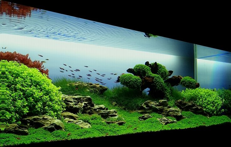 Bubbles Aquarium - Aquascapes (2008 Aquascaping Gallery) http://bubblesaquarium.com/Aquascape/Gallery2008/Gallery2008_MomentsofTranquility.htm#