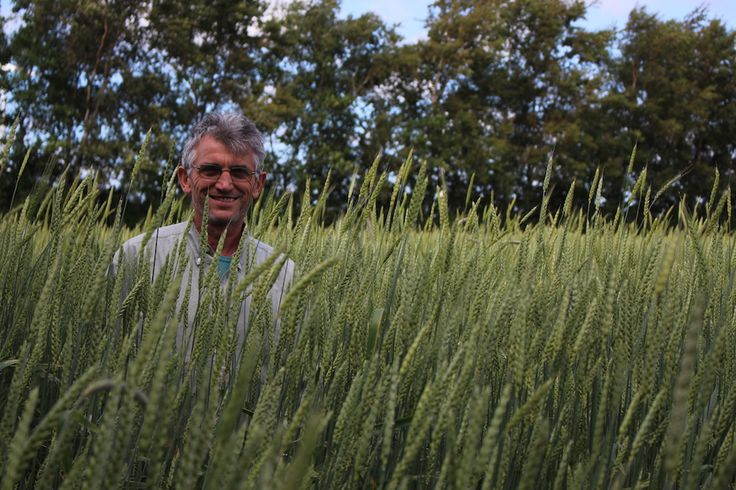 Dans les Hauts-de-France, des paysans ont réintroduit la culture de blés anciens et redonné vie à sa filière, du champ à la boulangerie en passant par le moulin. Ce choix revivifie les valeurs humaines et écologiques de l'agriculture paysanne.   Campagne-les-Boulonnais et Havrincourt (Pas-de-Calais), reportage Didier Findinier a repris, voici plusieurs années, la ferme de ses parents à Campagne-les-Boulonnais, dans le département du Pas-de-Calais. Sur les 25 hectares à sa disposition, un…