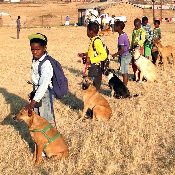 Visiting the Funda Nenja project in Mpophomeni. The initiative teaches children how to love and care for their dogs and to respect all other living creatures - www.fundanenja.co.za/