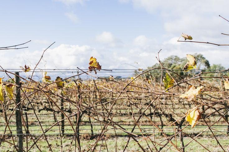 Broadsheet - Heathcote wine region