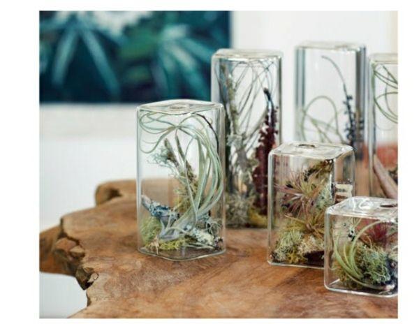 Mini Terrarium Glas Zuhause rustikaler Tisch Deko Pflanzen