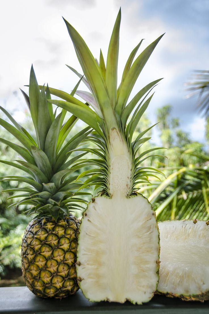 BEST one ever! About Pineapple | Kauaʻi Sugarloaf White Hawaiian Pineapple