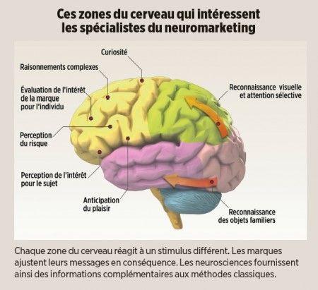 NeuroMarketing: Les zones du cerveau qui intéressent les spécialistes