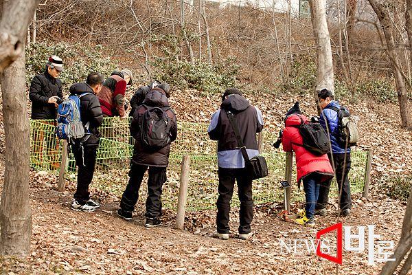 <<홍릉숲 - 봄을 알리는 복수초를 카메라에 담는 시민들...>> (홍릉숲에서 ©뉴스바로 장덕수 기자 2015.2.8)