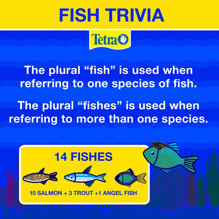 60 best fish are fun images on pinterest fish aquariums for Plural of fish