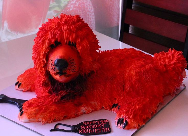 Hi im red  Tibetan Mastiff world expensive dog  who wanna like to hug me  #tibetanmastiff  #ChefAnwar