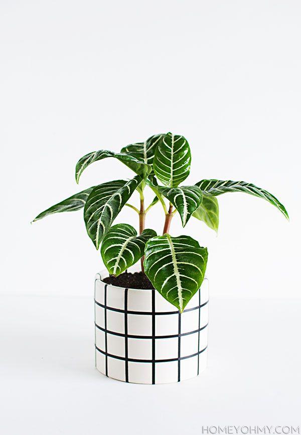 DIY - Grid Planter, need to make some!