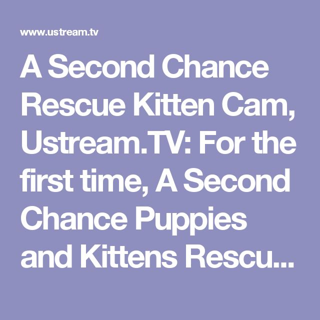 A Second Chance Rescue Kitten Cam, Ustream.TV: For the first time, A Second Chance Puppies and Kittens Rescue's kitten cam is hosting a cam for another res...