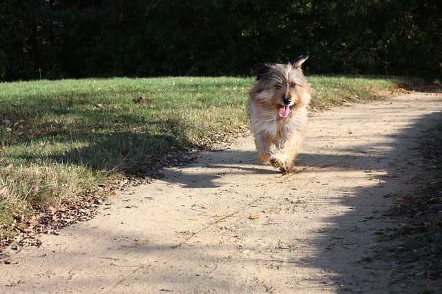 Your perfect running partner may be your dog! Check out our 5k training tips for you and your dog!