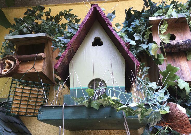 Progetto di STRA-DE STRATEGIC-DESIGN. Garden Bird Friendly : mangiatoia con noce di cocco e palla di semi e insetti,ideale per cince e cinciarelle .
