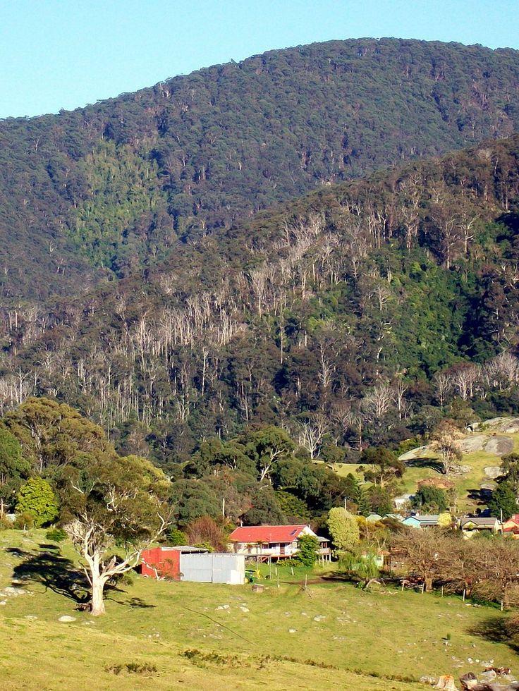 Gulaga+Mountain+and+a+Patch+of+Rainforest,Australia