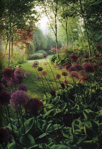 Allium and hosta flower border