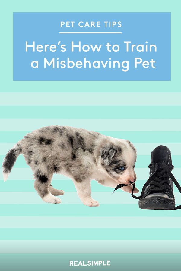 Here S How To Train A Misbehaving Pet With Images Pets Cat Yowling Pet Care
