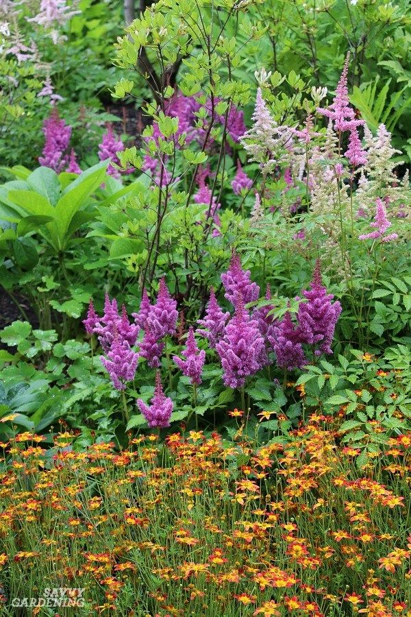 Shade Loving Perennial Flowers 15 Beautiful Choices For Your