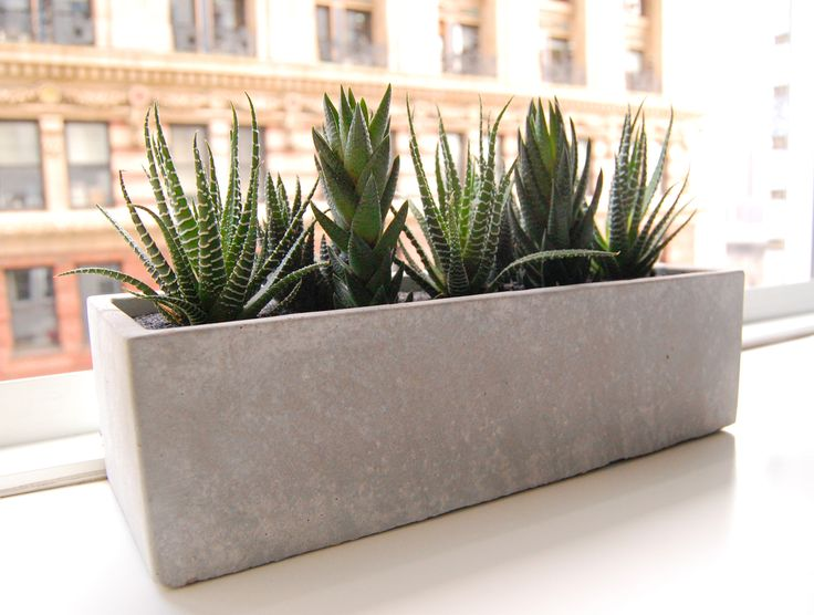 """Cactus Garden // Cement Planter Our white-washed cement planters have a cool, urban vibe. Paired with a modern cactus collection and black sand surface layer they combine nature and architecture perfectly.    What's in the box?  White-washed cement planter 12"""" x 3"""" x 3.5"""" (H) 3 x zebra cacti 4 x Haworthia cacti Small bag of gravel Potting soil Black sand Finishing brush"""
