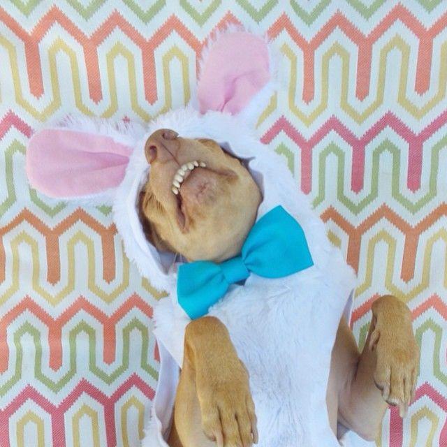 Tuna is so funny. Happy Easter Tuna! Tunameltsmyheart!