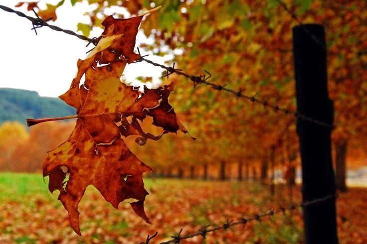 Autumn Leaf #Photography http://www.n3gateway.com/news5/14/151/Stephen-Pryke/d,detail.htm