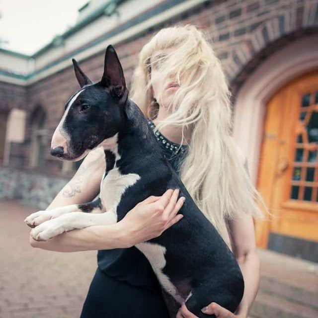 Kaapiobullterrierin Pentuja Terrier Boston Terrier Dogs