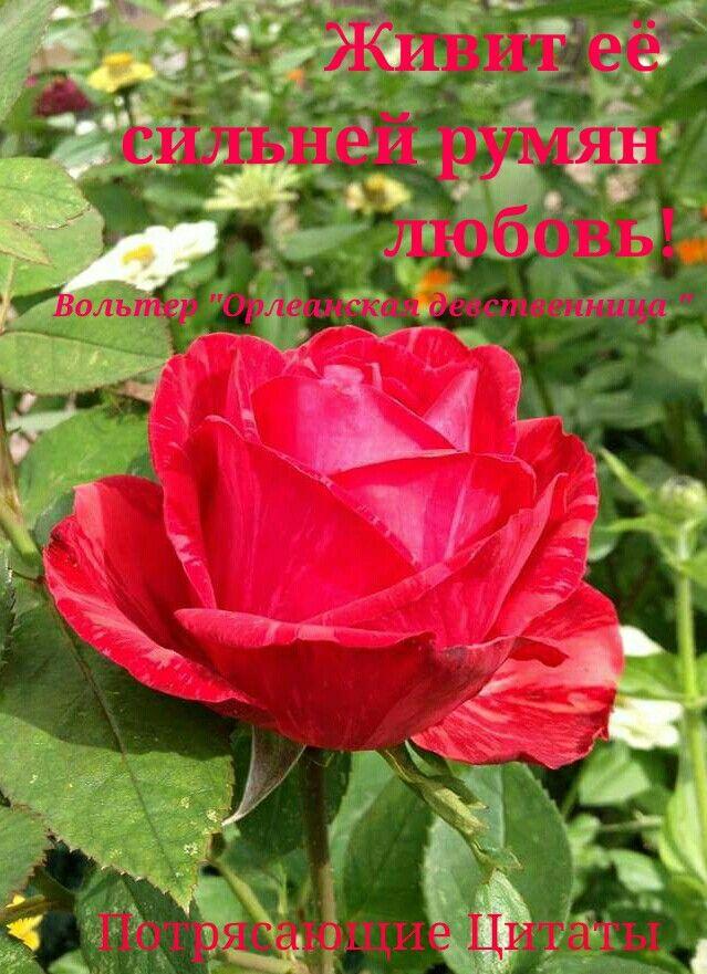 Потрясающие Цитаты  #цитата #любовь #вольтер #пушкин