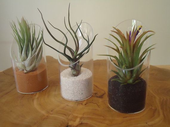 Great idea to display air plants! Valentines Day Special Modern Tilly Terrarium by SucculentDESIGNS, $9.95