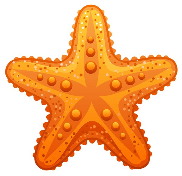 Transparent Starfish PNG Clipart Image