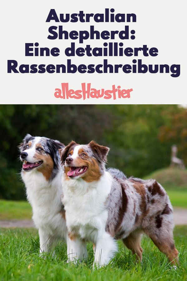 Pin Auf Dogs
