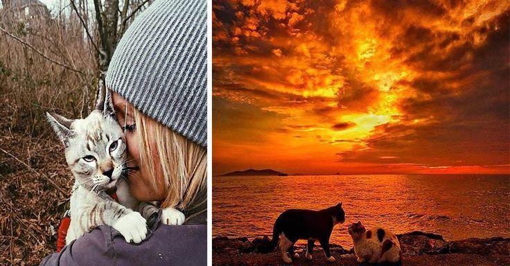 Мы уже вас знакомили с аккаунтом в Инстаграме «Camping With Dogs», где владельцы собак отправляются в поход со своими питомцами, в сегодняшней же статье мы хотим показать вам страничку в …